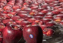 ΖΑGΟRΙΝ: Γεωργική παραγωγή και στοχευμένες δράσεις περιβαλλοντικής προστασίας