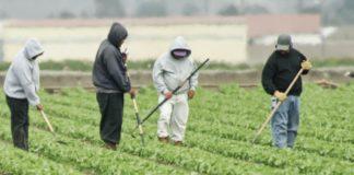 Άμεσα μέτρα θωράκισης και στήριξης των αγροτών από τον κορωνοϊό ζητάει η ΠΕΜ