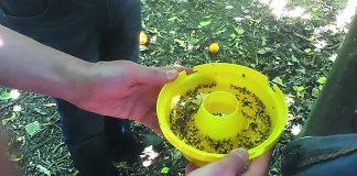 ΒΙΟΔΕΛΕΑΡ: Ένα καινοτόµο ελκυστικό καταπολεµά τη µύγα της Μεσογείου χωρίς τη χρήση εντοµοκτόνων