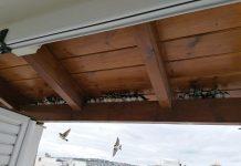 Εντοπίζονται δεκάδες νεκρά ή εξουθενωμένα μεταναστευτικά πουλιά