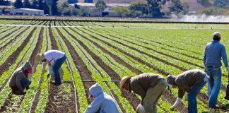 Ισπανία: Η κυβέρνηση επιτρέπει την πρόσληψη ανέργων και μεταναστών για να βοηθήσουν στη συγκομιδή