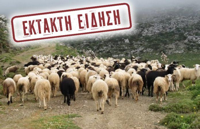 Στα 4 ευρώ ανά κεφάλι, 23 εκατ. ευρώ η συνολική αποζημίωση στα αιγοπρόβατα