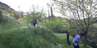Περιφέρεια Ηπείρου Βιολογική καταπολέμηση της σφήκας καστανιάς