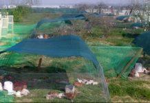 Αστικοί πτηνοτρόφοι σε δράση και εν μέσω καραντίνας, με τη βοήθεια της τεχνολογίας