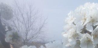 Έβρος: Κερασοπαραγωγοί συναντούν την άρνηση του ΕΛΓΑ για αναγγελία
