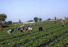 Έργα σε αγροτικές περιοχές Ορεστιάδας και Διδυμοτείχου, μέσω LEADER