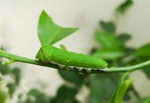 Ηλεκτρονική Πλατφόρμα Παρακολούθησης Εντόμων από την Corteva