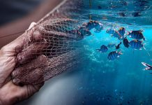 Η καραντίνα σώζει τους ελληνικούς βυθούς - Αύξηση αλιευμάτων ύστερα από 25 χρόνια