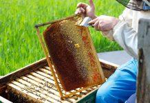Τηλεδιάσκεψη για τα προβλήματα της μελισσοκομίας είχε ο Μ. Βορίδης με εκπροσώπους του κλάδου από τα Ιωάννινα