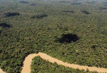 Τα τροπικά δάση μπορεί να απελευθερώνουν άνθρακα με την υπερθέρμανση του πλανήτη