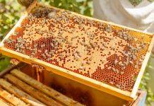 ΥΠΑΑΤ: Τουλάχιστον 200.000€ για την ενίσχυση της Ελληνικής Μελισσοκομίας