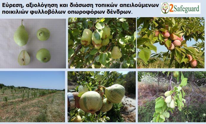 ΕΛΓΟ Νάουσας: Kαταγραφή και διάσωση τοπικών ποικιλιών φυλλοβόλων οπωροφόρων δέντρων
