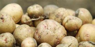 Γερμανία: «Συνταγή καταστροφής» ο κορωνοϊός, για τις γερμανικές πατάτες