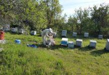 """""""Γίνε για μια ημέρα μελισσοκόμος"""" - To επισκέψιμο μελισσοκομείο στον Ταξιάρχη Χαλκιδικής"""