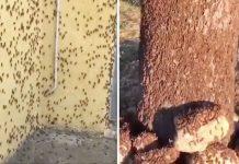 Ιταλία: Μετά τον κορωνοϊό και τα ακραία καιρικά φαινόμενα, οι γεωργοί αντιμέτωποι με επιδρομή ακρίδων