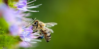 Καμπανάκι κινδύνου από 25.000 μελισσοκόμους της χώρας λόγω κορωνοϊού