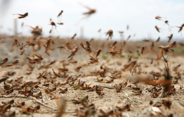 Αργεντινή: Η χώρα απειλείται από νέο κύμα ακρίδων, αγρότες σε συναγερμό