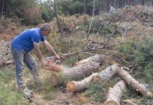 Στο δασόκτημα Θέρμης επεκτάθηκε το φλοιοφάγο έντομο του Σέιχ-Σου- Επιχείρηση απομάκρυνσης των προσβεβλημένων δέντρων