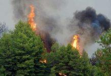 Σε εξέλιξη πυρκαγιές σε Κάρυστο και Κνωσό