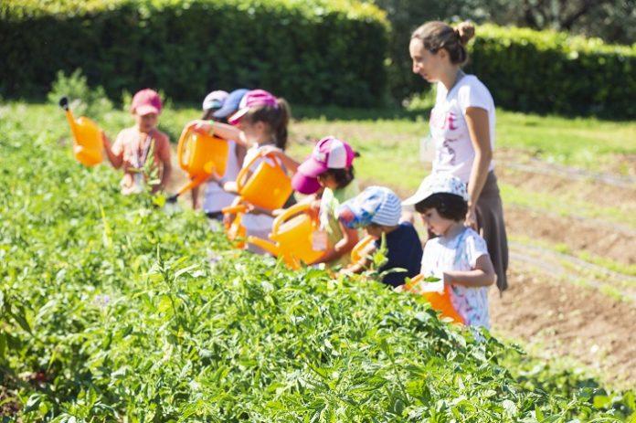 Little Green Farmers: Πλατφόρμα της ΑΓΣ για την ανάπτυξη κηπουρικών δραστηριοτήτων