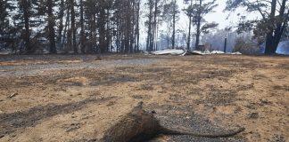 Τρία δισεκατομμύρια ζώα κάηκαν ή εκτοπίστηκαν στις φονικές πυρκαγιές της Αυστραλίας