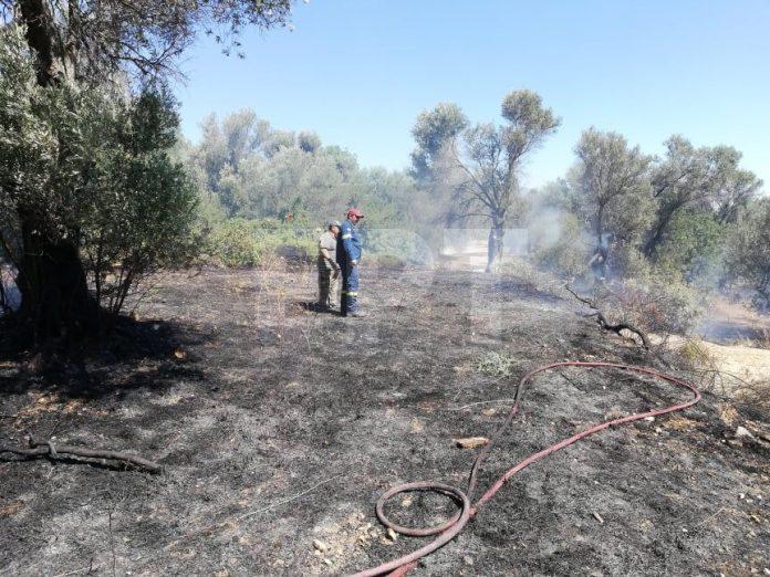 Χίος – Νένητα: Άμεσα σβήστηκε φωτιά σε καλλιέργειες