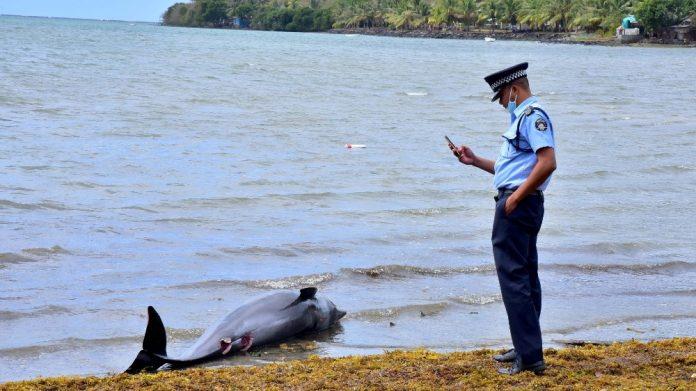 Τα 38 έχουν φτάσει τα νεκρά δελφίνια στον Μαυρίκιο από την πετρελαιοκηλίδα που προκάλεσε ιαπωνικό πλοίο