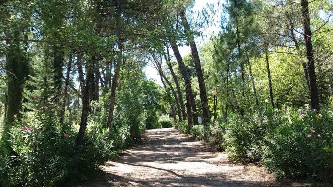 Αργολίδα: Διάνοιξη δασικών δρόμων μήκους 43 χιλιομέτρων