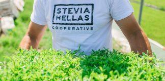 Έρχεται το πρώτο εργοστάσιο εκχύλισης στέβιας στην Ελλάδα