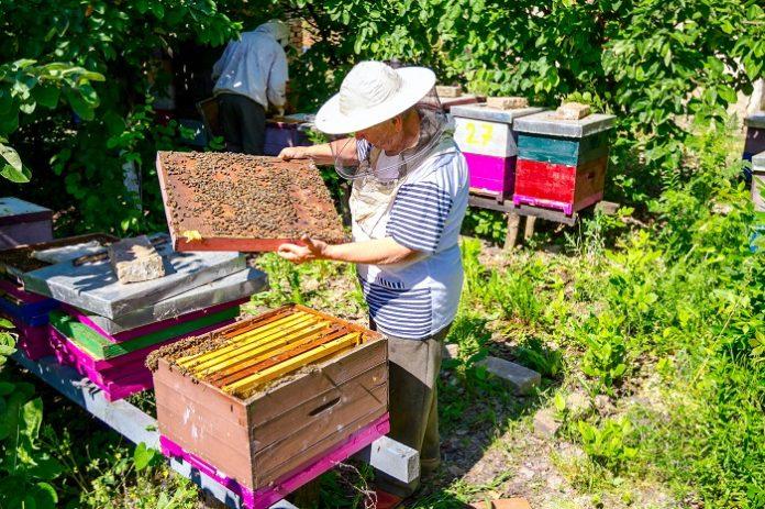 ΥΠΑΑΤ 1,8 εκατ. ευρώ για τη μελισσοκομία στα μικρά νησιά του Αιγαίου