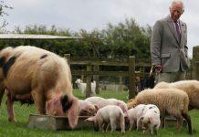 Ο πρίγκιπας Κάρολος εγκαταλείπει την βιολογική φάρμα μετά από 35 χρόνια