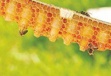 Σε απόγνωση οι μελισσοκόμοι της Κω – Δεν έχει πουληθεί η παραγωγή