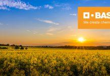 Η BASF ενισχύει το χαρτοφυλάκιο υβριδίων ελαιοκράμβης