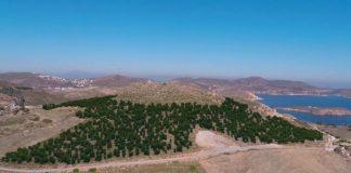 Ένα δάσος γεννιέται στην Πάτμο