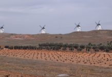 ΚΕΟΣΟΕ: Υψηλή η συγκομιδή στην Ισπανία, παρά τα μέτρα περιορισμού της παραγωγής
