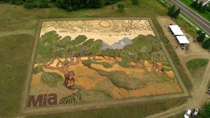 Του πήρε 6 μήνες να δημιουργήσει έναν πίνακα Van Gogh στο χωράφι του (βίντεο)