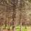 Βίντεο του προγράμματος LIFE+ για τη Γενετική Παρακολούθηση των Ευρωπαϊκών Δασών (LIFEGENMON)
