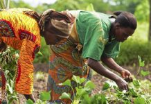 Διεθνής Ημέρα Αγρότισσας η 15η Οκτωβρίου