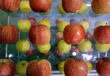 Εξαγωγή 20 τόνων κινεζικών μήλων στην Ιταλία, στο πλαίσιο συμβολαίου εξαγωγών 500 τόνων