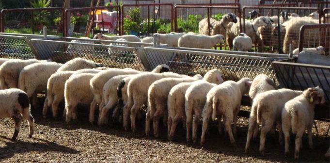 Ημερίδα για κτηνοτροφία με περισσότερη βιοασφάλεια στο Ναύπλιο