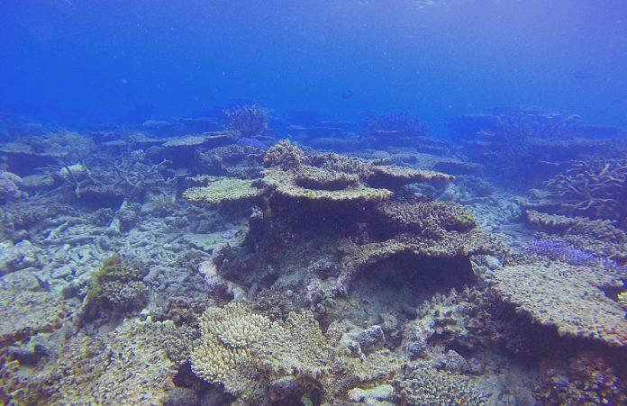 Κλιματική αλλαγή: Εξαφανίστηκαν τα μισά κοράλλια σε 25 χρόνια