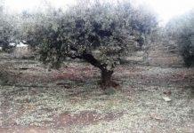 Κρήτη: Να προχωρήσει άμεσα η αποτίμηση των ζημιών από τον ΕΛΓΑ ζητούν οι αγρότες του Βραχασίου