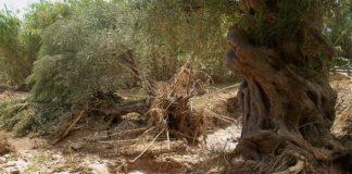 «Μίνι τυφώνας» στη Μεσσηνία, προκάλεσε ζημιές σε καλλιέργειες