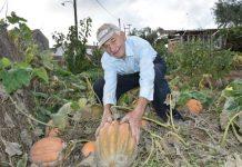 Ροδόπη: Κολοκύθια «γίγαντες» στον μπαξέ ενός ηλικιωμένου αγρότη