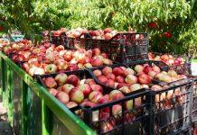 Ακόμη ένα έτος ρωσικού εμπάργκο στα φρούτα και λαχανικά της ΕΕ