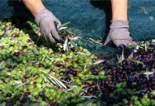 «Απανωτά» πέφτουν τα 300άρια για το λιομάζωμα - Κρητικός καλείται να πληρώσει… 10.500 ευρώ