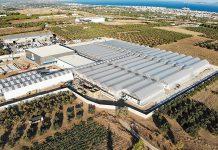 Φαρμακευτική κάνναβη made in Greece