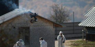 Κοζάνη: Ολοκληρώνεται σήμερα ο σφαγιασμός των μινκ- «Ύποπτες» 4 ακόμα φάρμες
