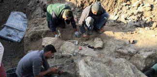 Μυτιλήνη: Δεκατέσσερις εντυπωσιακοί απολιθωμένοι κορμοί δέντρων, βρέθηκαν στο Σίγρι