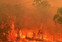 """Ανασκόπηση 2020: Από τις πλημμύρες μέχρι τις επιδρομές ακρίδων η """"κλιματική κατάρρευση"""" είχε μεγάλο κόστος"""